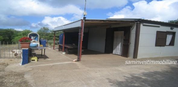 Vendita Bosco 11km San marco-Sannicandro Garganico